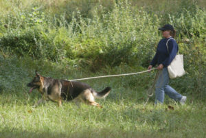 gsd_tracking